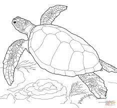 loggerhead sea turtle coloring page free printable coloring pages