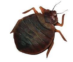 Trusted Bed Bug Solutions