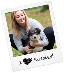 3 australian shepherd mix puppies for adoption australian shepherd puppies australian shepherd rescue