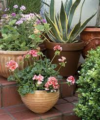 chic plants for gardens ideas 17 best ideas about small front