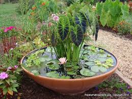 Small Rock Garden Pictures by Awesome Cozy Frontyard With Small Plants Also Flowers Plus Grass