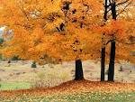 Wallpapers Backgrounds - Beauty Autumn Wallpapers Backgrounds 1
