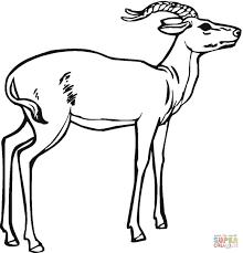 antelope coloring pages preschool and kindergarten