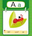 แบบฝึกอ่านภาษาอังกฤษ ABC (หนังสือ 1 เล่ม) ราคาพิเศษ 21 บาท ราคา ...