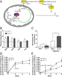 Indeed Ckm Pgc 1α Supports Glutamine Metabolism In Breast Cancer Cancer