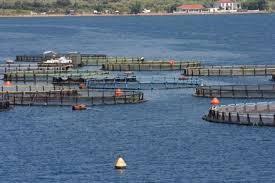open net fish farms