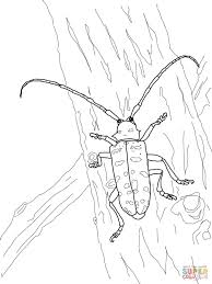 green june beetle coloring page free printable coloring pages
