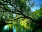 Wallpapers Backgrounds - Nature Forest Green River wallpaper (wallpapers nature forest green river walls normal scenery 1024x768)