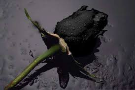 Kaliopi posvetila \u0026quot;Crne ruze\u0026quot; Tosi Proeskom - ♥♥Gromovi_na _dusa ... - 33a85m9