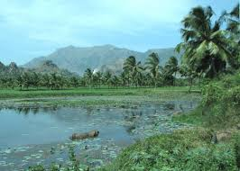 Nagercoil