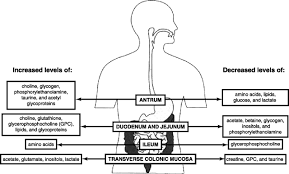 the intestinal microbiota gastrointestinal environment and