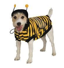Dog Costumes Halloween 150 Dog Costume Ideas Images Costume Ideas