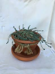 Succulents Pots For Sale by Containers And Decorative Plants For Sale Bloomin Pots By Cj