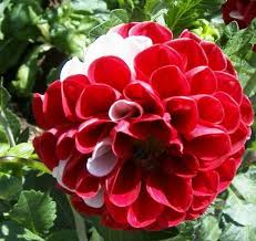 Las flores que nos gustan. Images?q=tbn:ANd9GcQot-84idzgquWy-4z0Zgf_UBnlavLn_wPIFFJWqNXVCs7311rTEw