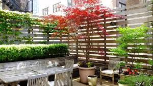 climbing plants on balconies patios and decks u2013 screening and