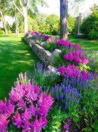 Second Nature Landscaping by Astilbie Chinensis And Salvia U0027blue Dimension U0027 Make A Blooming