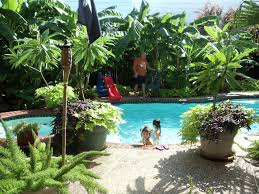 best 25 tropical pool landscaping ideas only on pinterest pool