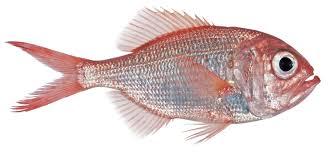 picture of a fish wallpaper download cucumberpress com