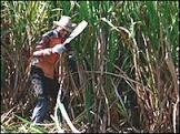 OCDE prevê avanço do Brasil em exportações agrícolas