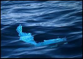 Mar Indigo