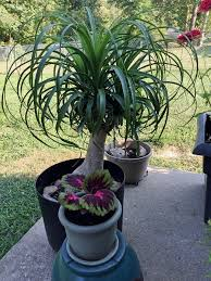 moving indoor plants outside