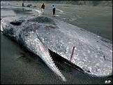 Baleia morta explode em cidade de Taiwan