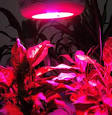 Hydroponics Equipment You Need To Have For Successful Growing ...