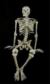Halloween Skeleton Props by Animated Witch Laughing Hag Prop New Horror Halloween Haunted