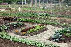 fafardfive step vegetable garden prep