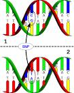 Définition > SNP - Single