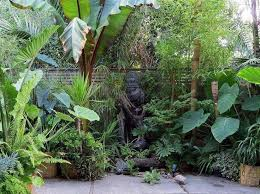 best 25 small tropical gardens ideas on pinterest small balcony