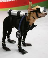 best halloween costumes for scuba divers sport diver