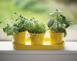 Simple Silo Builder 100 Herb Window Box Indoor Ikea Moves Into Indoor Gardening