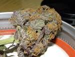 Purple Kush | Purple Kush Seeds | Grow-Marijuana.com - Downloadable