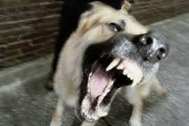 Agrese psů pod kontrolou genetiků
