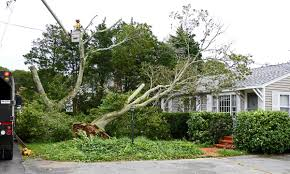 falmouth sees minimal impacts from jose falmouth news capenews net
