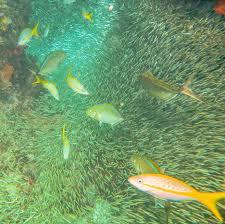 testing the water identifying marine communities through edna