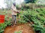 La Culture du Piment: une bonne opportunité pour le développement ...