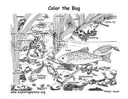 tadpole coloring page bog coloring page