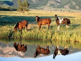 Mis amores los caballos Images?q=tbn:ANd9GcQxkG--9T9PgHXGUZSGCaPowu3O34rjjzFpTDs79UQnr7KbyHOoyw