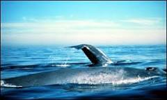 Comissão decide manter proibida a pesca de baleias | BBC Brasil