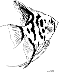 splendid design ideas freshwater fish coloring pages freshwater