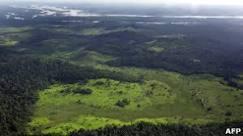Câmara discute Código Florestal; veja pontos polêmicos