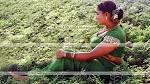 Indian Hot Actress: Kavya rare navel,Nipple shade and ass caught show