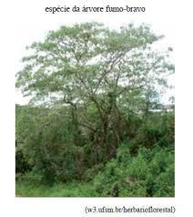 O artigo Uma estrada, muitas florestas relata parte do trabalho de ...