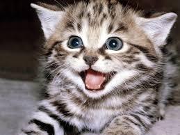 Kawaii Kitties  Images?q=tbn:ANd9GcR0FrQBLM97KZ3P4tfiJTwgPNnTzcz2pDr8HU7Q41lu63IlTJzjHbSMdXBkmA