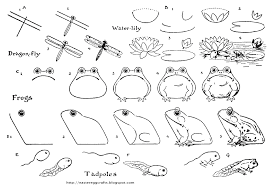 tadpole coloring page frogs toads and pollywogs for spring easter egg crafts