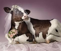 يبي يتزوج