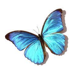 Kelebek hakkında bilgiler