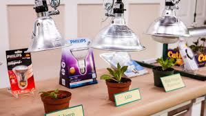 plant grow lights home u0026 family hallmark channel